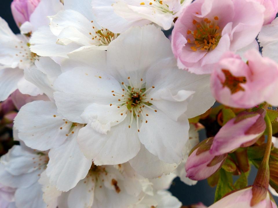 column-cherry-1348028_960_720